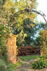 the graceful gardener knockout roses