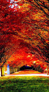 photo collection wallpapers autumn wallpaper trees