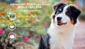 australian shepherd ugly stage amazon com adventure plus 1 dose small dog 3 10 lbs made