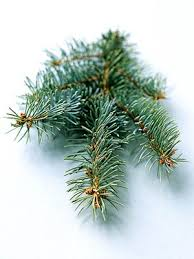 9 favorite trees bluish gray