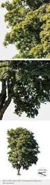 british native plants 803 best photoshop vegetation images on pinterest plants botany