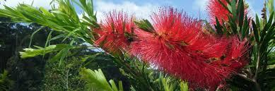 Tropical Rainforest Plant Species List - go green rainforest nursery stocking australia u0027s flora and fauna