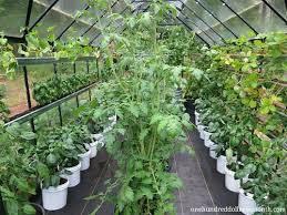Garden Shed Greenhouse Plans 143 Best Garden Greenhouses U0026 Sheds Images On Pinterest