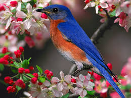 Flower And Bird - males identify potential nest and try to attract prospective