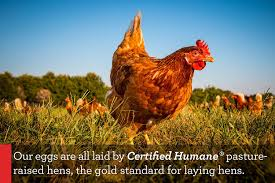 vital farms alfresco pasture raised grade a large eggs 1 dozen