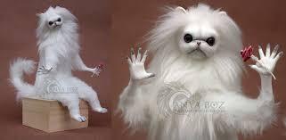 Persian Cat Meme - anya boz home facebook