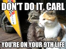 Cat Lover Meme - don t do it carl catoftheday cat of the day pinterest