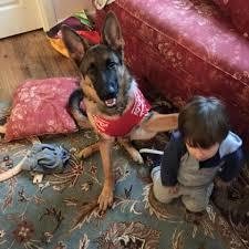 belgian sheepdog massachusetts canine clippers home facebook
