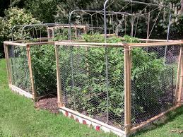 How To Grow Grapes In Your Backyard by 7 Ways To Keep Squirrels From Eating Your Tomatoes Mnn Mother