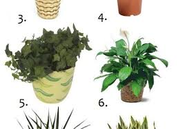 plant images about house plants gardens home plus garden indoor