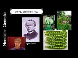 029 mendelian genetics u2014 bozemanscience
