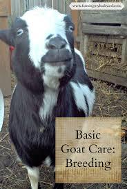 895 best for the farm images on pinterest raising goats baby