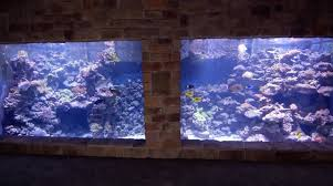 home aquarium man gives tour of the largest privately owned reef fish tank in