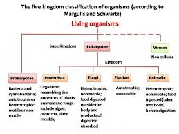 explain the basis for grouping organisms into five kingdoms