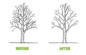 tree trimming pruning tempe az arbor care professional tree care