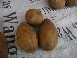 sarawakiana binjai a forgotten fruit