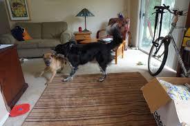 american eskimo dog rescue wichita ks life with dogs codemanbc