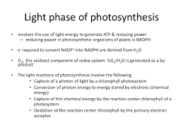 What Happens During The Light Reactions Of Photosynthesis Photosynthesis Light Phase