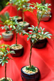 unique party favors bonsai tree what a unique party favor favors