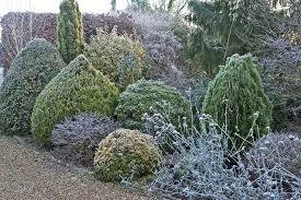 evergreen trees for landscaping evergreen ornamental trees for