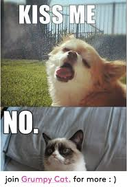 Grumpy Cat Meme No - kiss me no join grumpy cat for more cats meme on sizzle