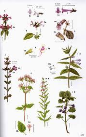 plants native to england the wild flower key francis rose clare o u0027reilly martine