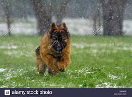 Dog In Shower by Dog Shower Stock Photos U0026 Dog Shower Stock Images Alamy