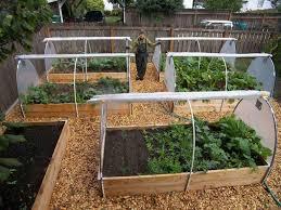best of backyard vegetable garden ideas image17