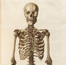 vintage halloween skeleton 101 hi res antique human skeleton illustrations high quality