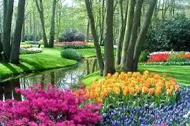 the 10 best keukenhof gardens tours trips u0026 tickets amsterdam