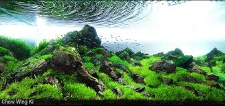 Aquascape Moss A Guide To Keeping And Growing Aquatic Moss U2022 Aquascaping Love