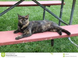 barn cat with light green eyes stock photo image 42895530