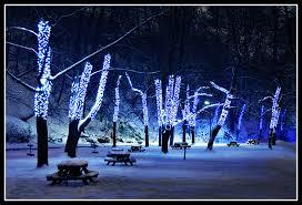 led lighting ideas for winter birddog lighting
