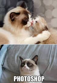 Funny Grumpy Cat Memes - grumpy cat meme grumpy cat pictures and angry cat meme