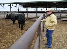 Oklahoma travel noire images Episode 583 cow noir planet money npr jpg