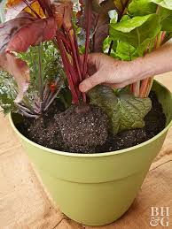 lovable best soil mix for container vegetable garden best soil mix