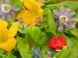 Edible Flowers Grow Edible Flowers Garden Org