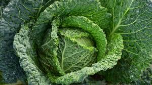 green cabbage wallpaper mobile u0026 desktop background
