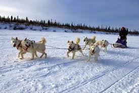 dogsledding spectacular northwest territories