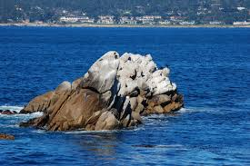 Point Lobos State Reserve Map by File Usa Point Lobos State Reserve Whalers Cove 10 Jpg Wikimedia