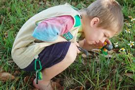 backyard safari explorer kits review surviving a teacher u0027s salary