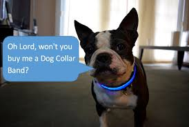 Light Up Dog Collar Why Consider Led Dog Collar To Your Pet Eternity Led Glow