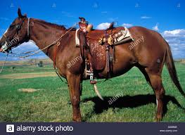 montana side view of horse with handmade saddle bridle and tack