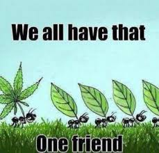 Inspirational Funny Memes - funny inspirational memes hempdog healing