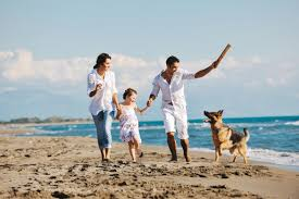 guide to pet friendly florida rentals vacationrentals com