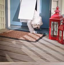 through the glass dog doors electronic dog door the invisible fence brand