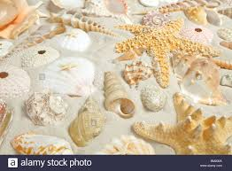 assorted seashells assorted seashells on a filling the frame stock photo