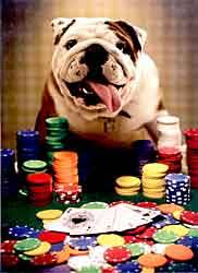 the bulldog shop bulldog greeting cards notecards