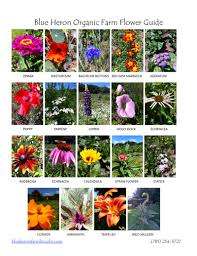 Wedding Flowers Guide Blue Heron Organic Farm Pick Your Own Wedding Flowers