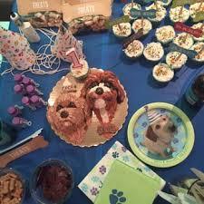 dog cakes for dogs 167 photos u0026 21 reviews custom cakes